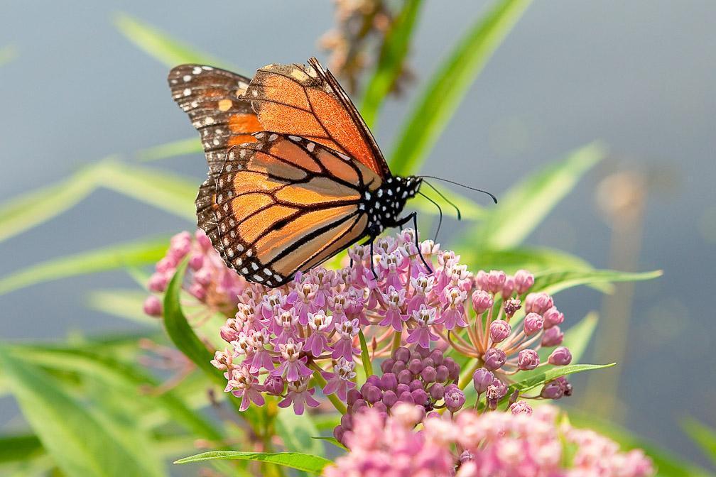 Environmental Education Center Celebrates National Pollinator Week Brooklyn Bridge Park